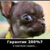 Инфобизнесмены рунета. Обман через интернет.