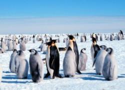Удивительные факты о Антарктиде и океанах