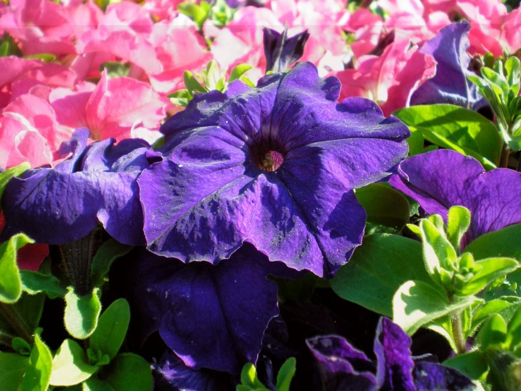 красивые цветы фотография, женский журнал