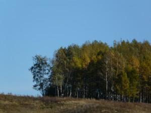 красивый-вид-на-лысой-горе-лесочек-летом-деревья