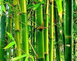 бамбук, подушки из бамбука