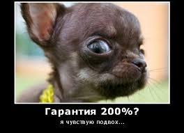 инфобизнесмены рунета,лоховодство,+как обмануть людей +в интернете,  обманули +в интернете +что делать, обман людей в интернете,  инфобизнесмены, сколько зарабатывают инфобизнесмены,как мошенники обманывают +в интернете
