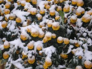 фотографии природы +и цветов