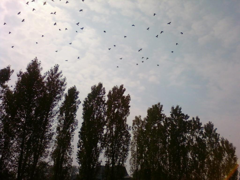 фото лето деревья, как перестать привязываться +к людям