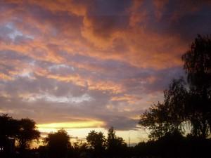 фотографии природы +и цветов небо