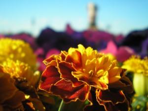 фотографии природы +и цветов цветы