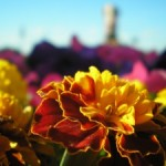 Фотографии природы и цветов. Наслаждайтесь!