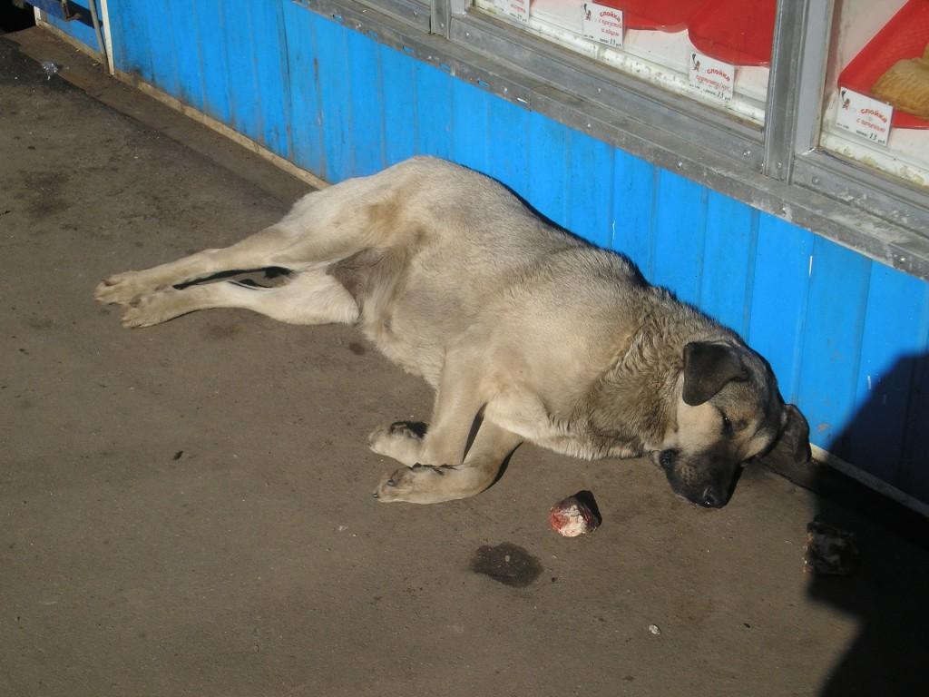 собака бездомная лежит на улице