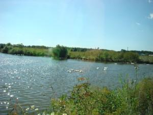 как сдать гиа, озеро с уточками