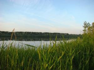 красивое озеро летом трава и небо голубое