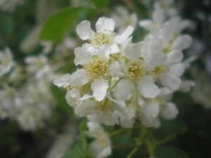 Прикольная переписка на сайте знакомств. цветы