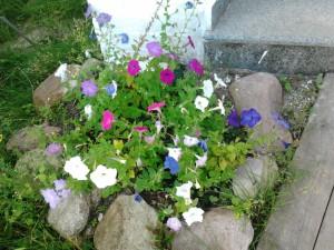 клумба цветы красивые фото
