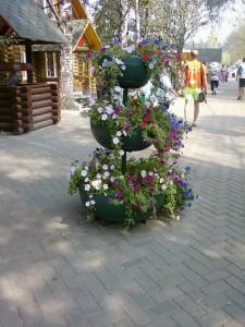 фото цветы красивые