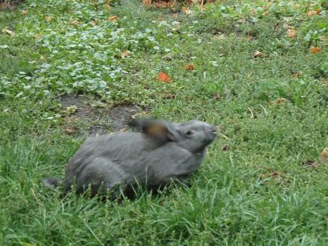 кролик бежит фото на зеленой лужайке