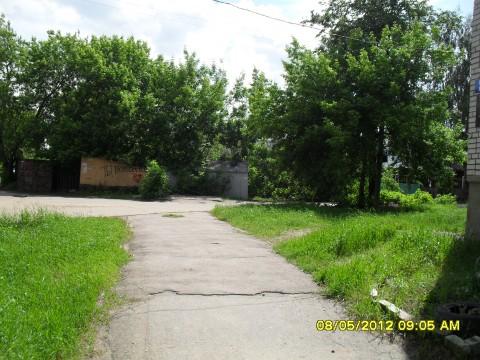 фотография дорога и деревья