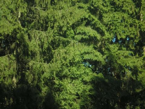 фото природа красивая деревья